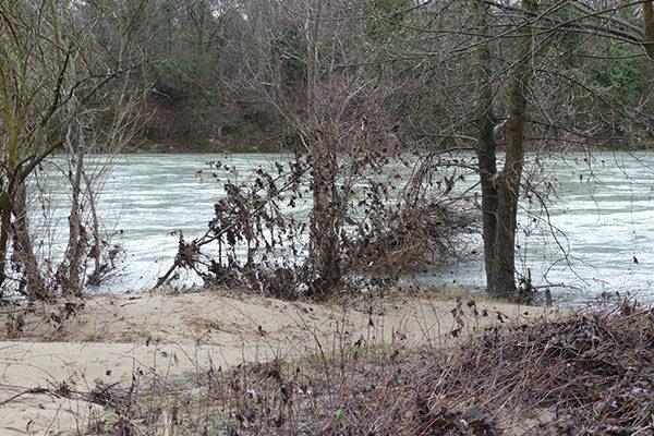 La restauration de la berge rive droite du canal de Miribel